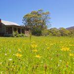 Moonbah Hut Spring Grasses